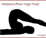 halasana plow pose