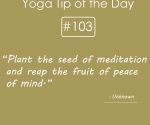 Plant the seed of meditation